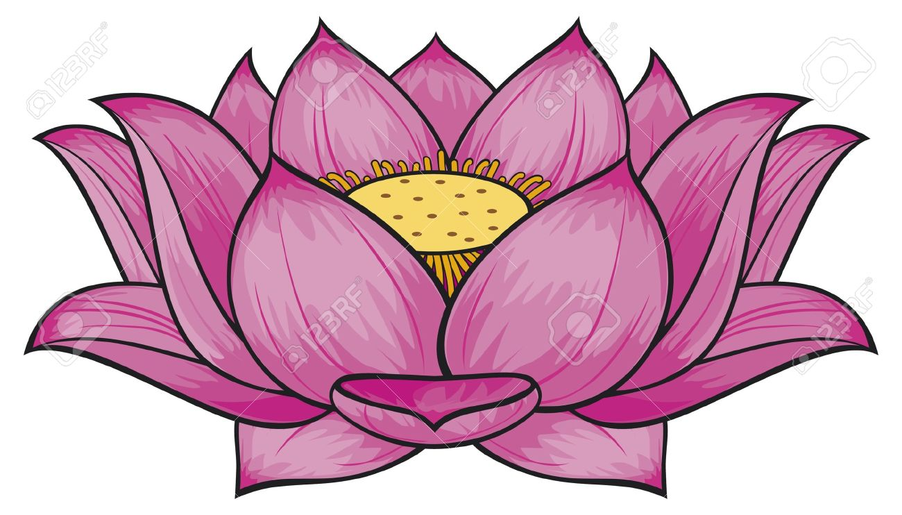 15039843-Lotus-flower-Stock-Vector-drawing